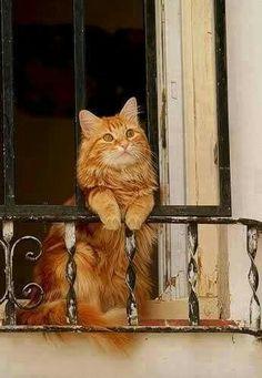 """=^..^= """"Romeo. Romeo. Wherefore Art Thou Romeo?"""""""