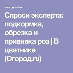 Спроси эксперта: подкормка, обрезка и прививка роз | В цветнике (Огород.ru)