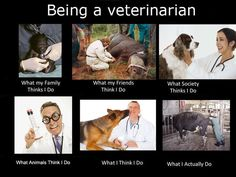 What people think I do as a veterinarian.