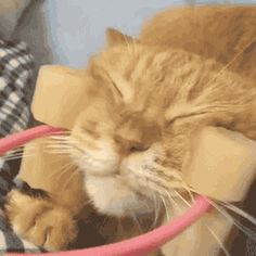 Share this Tool for facial massage to cats Animated GIF with everyone. Gif4Share…