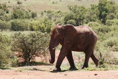Pilanesberg, Zuid-Afrika