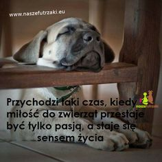 Dog Quotes, Life Quotes, Animals And Pets, Baby Animals, I Love You, My Love, Pitbulls, Inspirational Quotes, Lettering