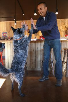 Pet-Friendly Travel: A Colorado Road Trip with Dogs — Camels & Chocolate