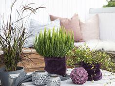 Høstpyntet terrasse i tre stiler Plants, Diy, Bricolage, Flora, Do It Yourself, Plant, Diys, Planets