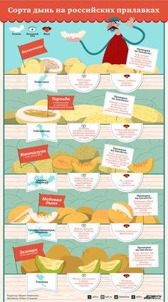 Какие дыни нам продают и как определить их спелость   Продукты и напитки   Кухня   Аргументы и Факты