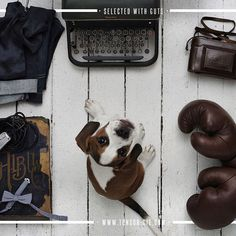 tonsor_cie#tonsor_cie #instadaily #instamood #stuff #men #mensstyle #barbershop #conceptstore #toulouse #dog #fashion #inspiration #style #picoftheday #chien