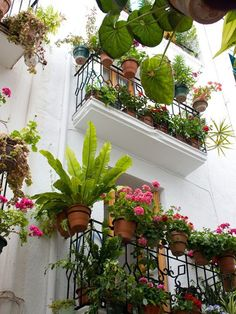 a balcony garden in france The French have a special knack of creating beautiful planting in small spaces. a balcony garden in france The French have a special knack of creating beautiful planting in small spaces. Small Balcony Garden, Balcony Plants, Patio Plants, Small Patio, Indoor Garden, Indoor Plants, Outdoor Gardens, Balcony Ideas, Balcony Gardening