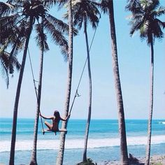 swinging between the palm trees