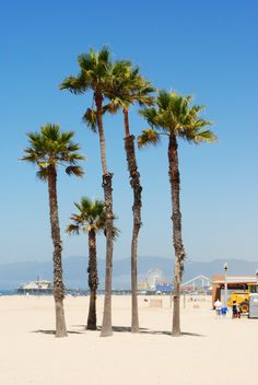 Venice beach. Can't wait to be here!!!