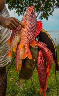 Day's Catch . Mahe Island