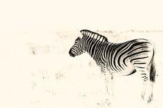 Africa...www.Karens.co.za All Gods Creatures, Wildlife, Africa, Animals, Animales, Animaux, Animal, Animais, Afro