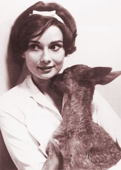 Actress Audrey Hepburn gets a kiss from her pet fawn, IP, in her home. Audrey Hepburn is married to actor Mel Ferrer. Get premium, high resolution news photos at Getty Images Audrey Hepburn Stil, Audrey Hepburn Photos, Katharine Hepburn, Vintage Dior, Vintage Vogue, Vintage Glamour, Natalie Wood, Old Hollywood, Hollywood Images