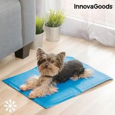 Surprise your pet this summer with the new InnovaGoods Home Pet refreshing pet mat x 50 cm)! Ideal for relieving pets from the summer heat and Love Your Pet, Your Dog, Pet Cooling Mat, Heated Pet Beds, Cat Dog, Pet Mat, Large Animals, Summer Heat, Background Patterns