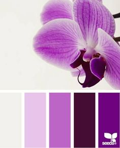 The purple side of Orchid pallette