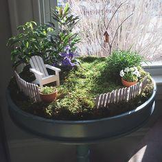 Plant An Indoor Fairy Garden. – A Little Lair®