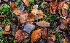 Autumn Macro Work - Stacking 11 images Zerene Stacker. edit lightroom. Taken random Place my forest path.