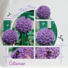 Azza - Caraibes (Celiscrap)