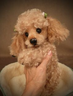 """Tuffy"" the Poodle Palm Puppy...I'd say this was a real pup but the toes looked stitched"