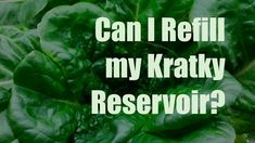 Can you refill your reservoir if you are growing using the Kratky method? I say yes, though there are pros and cons to doing so. Hydroponic Grow Systems, Hydroponic Gardening, Hydroponics, Grow Your Own Food, Urban Farming, About Me Blog, Outdoor Ideas, Herb, Homestead