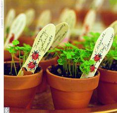 Wedding favors -  tiny pots of herbs