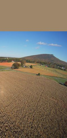 Jeff Poplin flew a camera on a kite to image this field of dried corn near Pilot Mountain, North Carolina.    The bright area at left is an Opposition Effect glow directly opposite the sun. A light streak rises from it in the 11 o'clock direction. See below for another view. ©Jeff Poplin, shown with permission