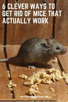 6 Clever Ways To Get Rid Of Mice That Actually Work Getting Rid Of Mice Diy Mice Repellent Clever