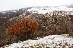 The bronze Tree in Winter! by Khaled Esmaili on 500px