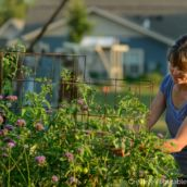 Tomato Pruning Creative Vegetable Gardener:How to Prune Your Tomato Plants Like an Expert - Creative Vegetable Gardener Tomato Plant Care, Pruning Tomato Plants, Tomato Trellis, Tomato Cages, Backyard Vegetable Gardens, Tomato Garden, Garden Landscaping, Growing Tomatoes, Growing Herbs