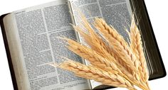 Does the Bible Say We Should Eat Grains? Very interesting perspective on why a grain free lifestyle is better, using the Bible as the main base reference Grain Free Bread, Health Tonic, Wellness Mama, Gaps Diet, Health And Nutrition, Nutrition Websites, Nutrition Quotes, Health Articles, Nutrition Articles