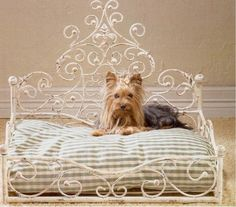 Antique pet bed...one day Edward