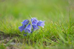 Mountains flora by Costin Mugurel on 500px