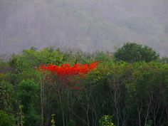 Flame of the Forest! (Gulmohar) by Sastha Prakash on 500px