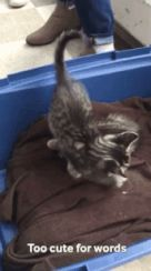 Meow! check this Gif by Giphy on #CatOnWeb cats kitten catsonweb cute