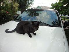 Mi gata  de nombre mima, muy atenta a los que la miram.