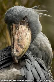 strange looking birds - Google Search