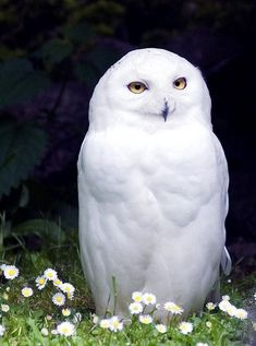 White Owl as a symbol of my Leadership capabilities and Spirit Animal