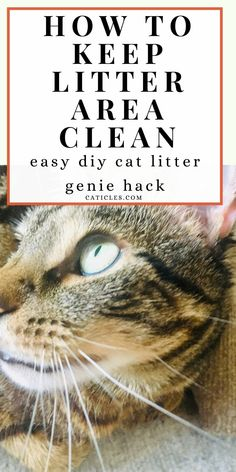 Want to keep the litter area clean? Try this DIY cat litter genie hack! The litter genie is made out of plastic so it's difficult to keep clean. Use this sanitary, cheaper option instead! This simple and cheap tutorial shows you how to DIY a litter genie so cleaning the litter box is easier on you. Get the best cat care hacks here! Keeping a clean litter box is a must for cats. Cats are clean creatures that deserve a clean bathroom just like you do! Check out the guide today… Cat Care Tips, Pet Care, Diy Litter Box, Living With Cats, Diy Cat Toys, Cat Hacks, Cat Sitter, Cat Garden, Cat Decor