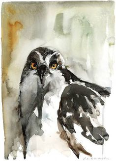 Osprey Portrait – Limited Edition Print