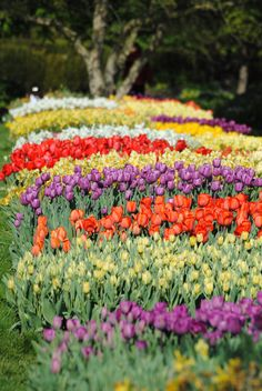 Walk together, holding hands to smell the #tulips, see their #beauty and enjoy the #sun