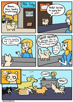 cute cats and cheeseburgers - Google Search