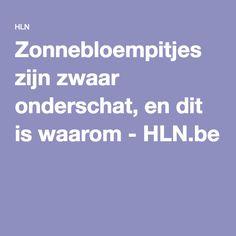Zonnebloempitjes zijn zwaar onderschat, en dit is waarom - HLN.be