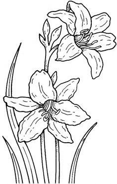 Narcissus 1 Coloring page Flower Coloring Pages, Colouring Pages, Daffodil Tattoo, Flower Sketches, Autumn Painting, Silk Painting, Flower Template, Free Printable Coloring Pages, Floral Illustrations