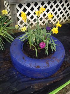 Had some spare tires I used to work out with. Turned them into flower pots!