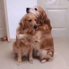 Don't leave me and pets videos True Lover The Animals, Cute Little Animals, Smiling Animals, Animals & Pets, Colorful Animals, Fluffy Animals, Wild Animals, Cute Funny Dogs, Cute Funny Animals