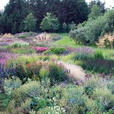 """Piet Oudolf's New Garden Book, """"Plantings"""" : Architectural Digest The Effective Pictures We Offer You About Garden Types landscapes Prairie Garden, Meadow Garden, Dream Garden, Rain Garden, Architectural Digest, Plant Design, Garden Design, Design Design, Amazing Gardens"""