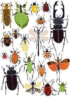 Bzzzzz... leuk om te weten wekle insecten je buiten tegen komt: Ansichtkaart Insecten   NIEUW   Buiten de Lijntjes