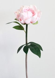 Real Touch Peony in Pink - Tall Types Of Flowers, Fake Flowers, Flowers Nature, Exotic Flowers, Amazing Flowers, Artificial Flowers, Dried Flowers, Pink Flowers, Beautiful Flowers