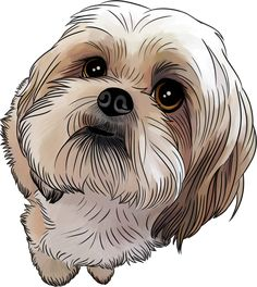 """Find out more info on """"shih tzu puppies"""". Browse through our website. Shih Tzu Hund, Chien Shih Tzu, Perro Shih Tzu, Shih Tzu Puppy, Shih Tzus, Puppy Gifts, Dog Paintings, Dog Art, Cute Dogs"""