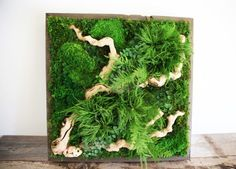 Delightful Design Living Wall Art Artisan Moss Plant Paintings Are Maintenance Free Alternatives