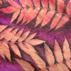 Colourful Cochineal Eco Print